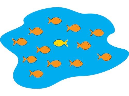fish upstream