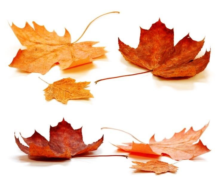 fall conference munson